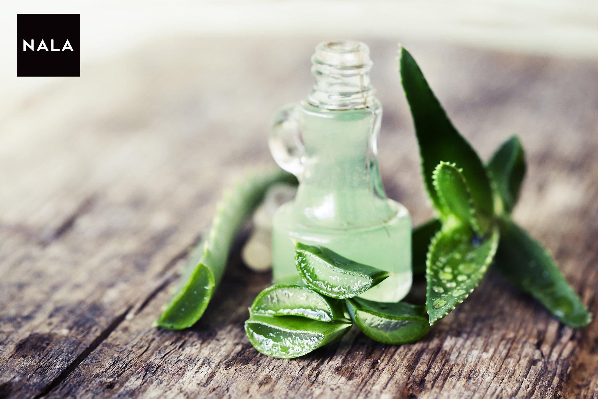 Aloe Vera – Top 22 beneficii